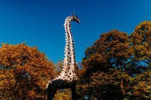 Żyrafa w parku Praskim